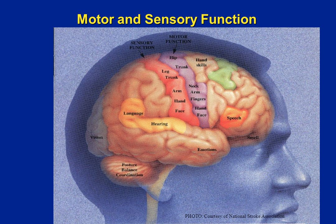 Motor and Sensory Function PHOTO: Courtesy of National Stroke Association