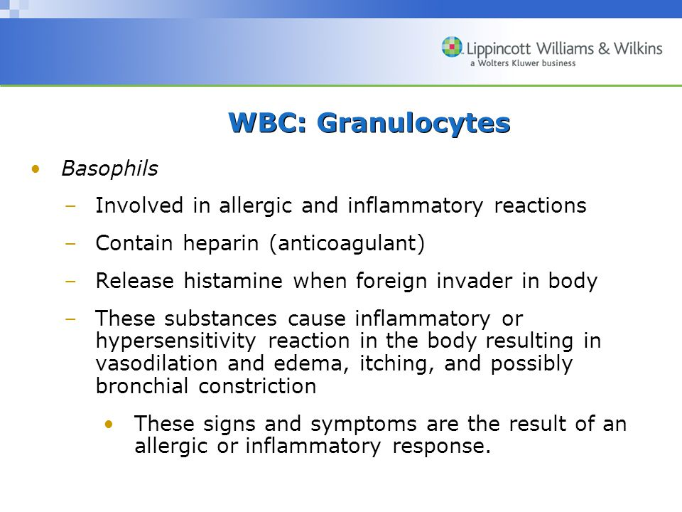 WBC: Granulocytes Basophils –Involved in allergic and inflammatory reactions –Contain heparin (anticoagulant) –Release histamine when foreign invader in body –These substances cause inflammatory or hypersensitivity reaction in the body resulting in vasodilation and edema, itching, and possibly bronchial constriction These signs and symptoms are the result of an allergic or inflammatory response.