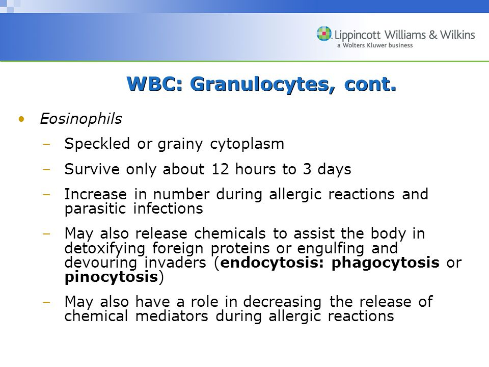 WBC: Granulocytes, cont. Eosinophils –Speckled or grainy cytoplasm –Survive only about 12 hours to 3 days –Increase in number during allergic reaction