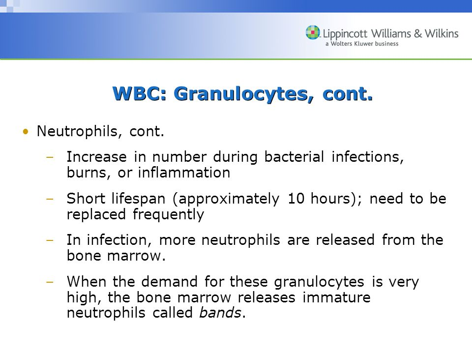 WBC: Granulocytes, cont. Neutrophils, cont. –Increase in number during bacterial infections, burns, or inflammation –Short lifespan (approximately 10