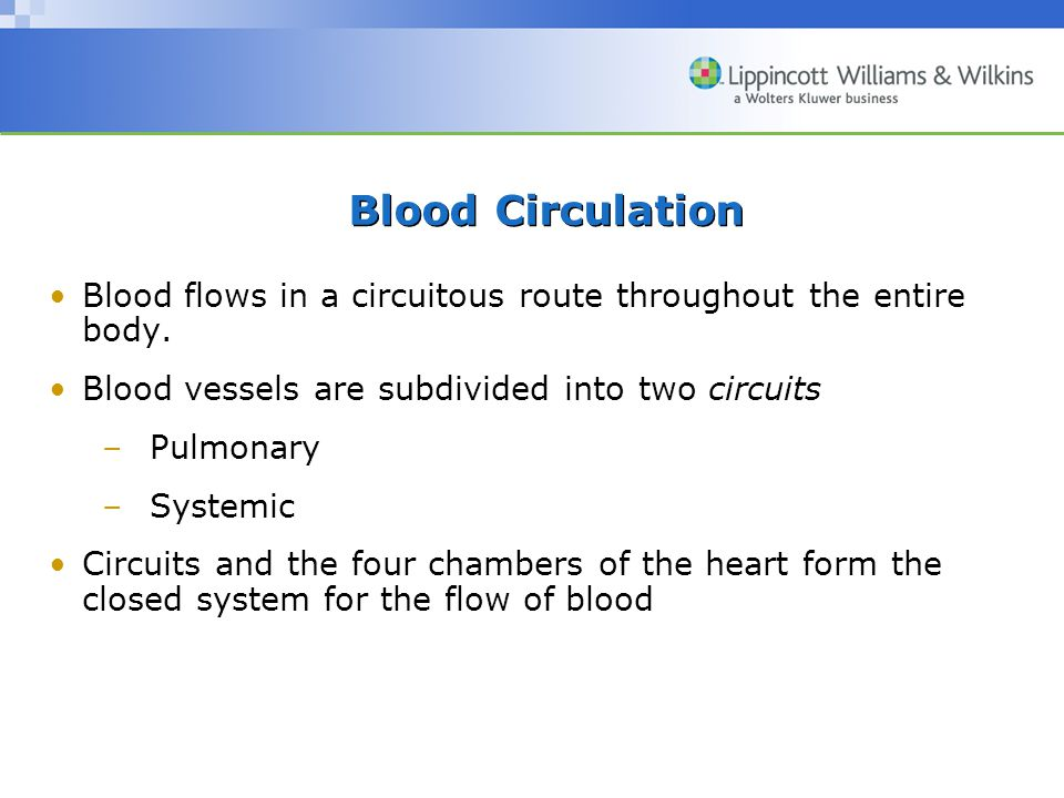 Blood Circulation Blood flows in a circuitous route throughout the entire body.