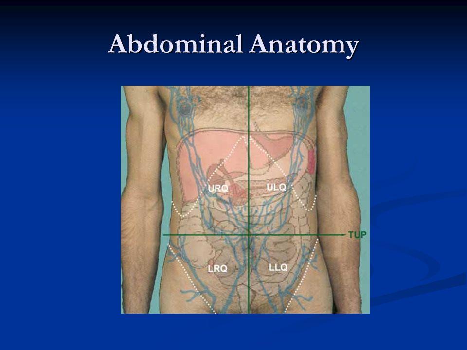 Abdominal Anatomy
