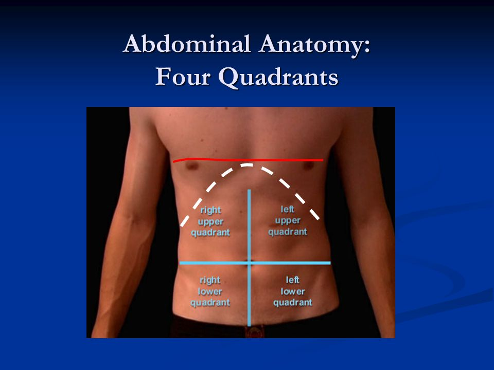 Abdominal Anatomy: Four Quadrants