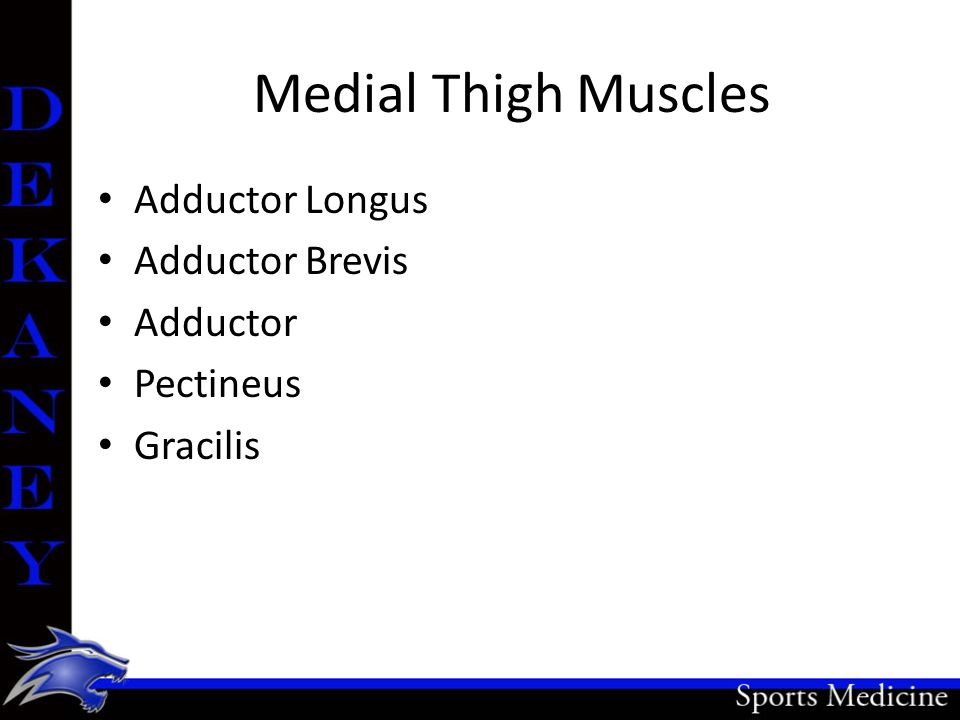 Medial Thigh Muscles Adductor Longus Adductor Brevis Adductor Pectineus Gracilis