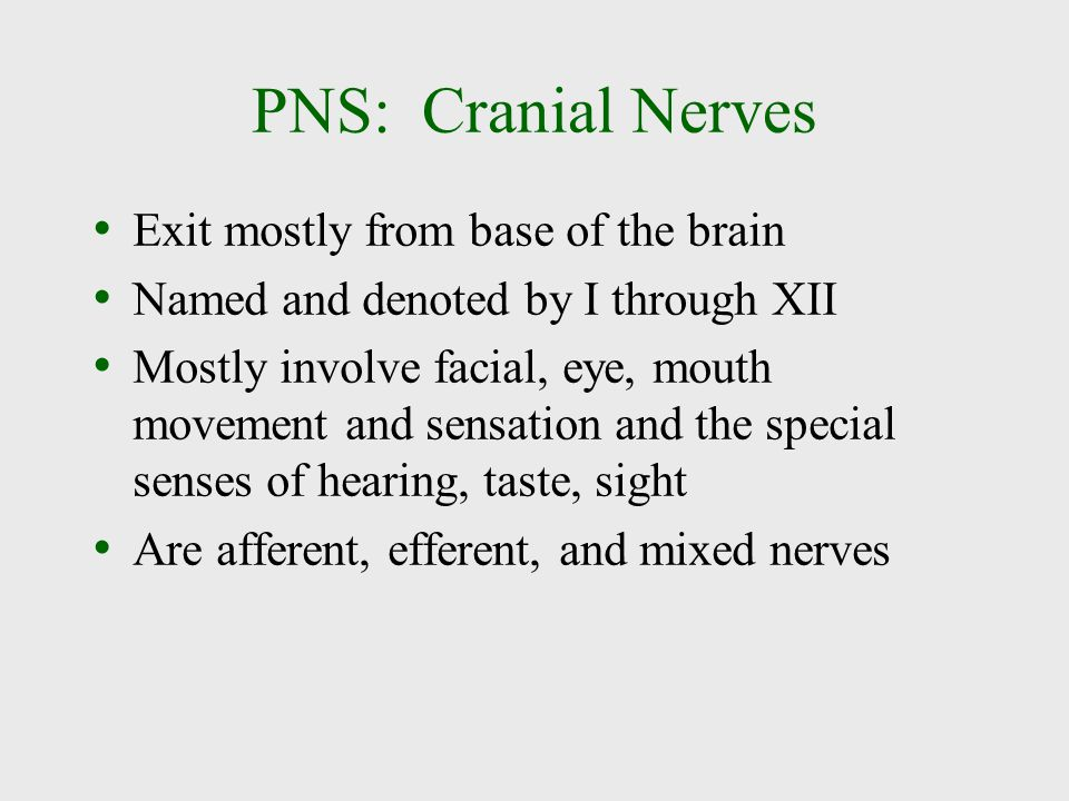 PNS: Cranial Nerves Exit mostly from base of the brain Named and denoted by I through XII Mostly involve facial, eye, mouth movement and sensation and