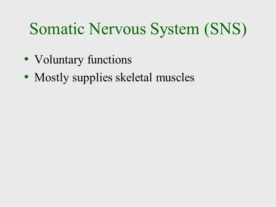 Somatic Nervous System (SNS) Voluntary functions Mostly supplies skeletal muscles