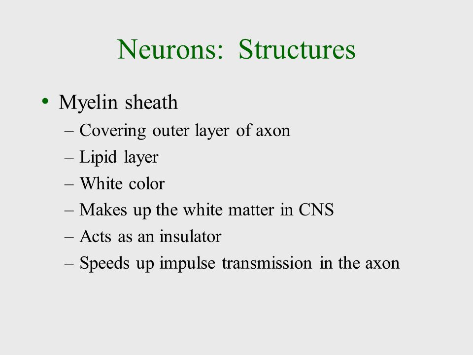 Neurons: Structures Myelin sheath –Covering outer layer of axon –Lipid layer –White color –Makes up the white matter in CNS –Acts as an insulator –Spe