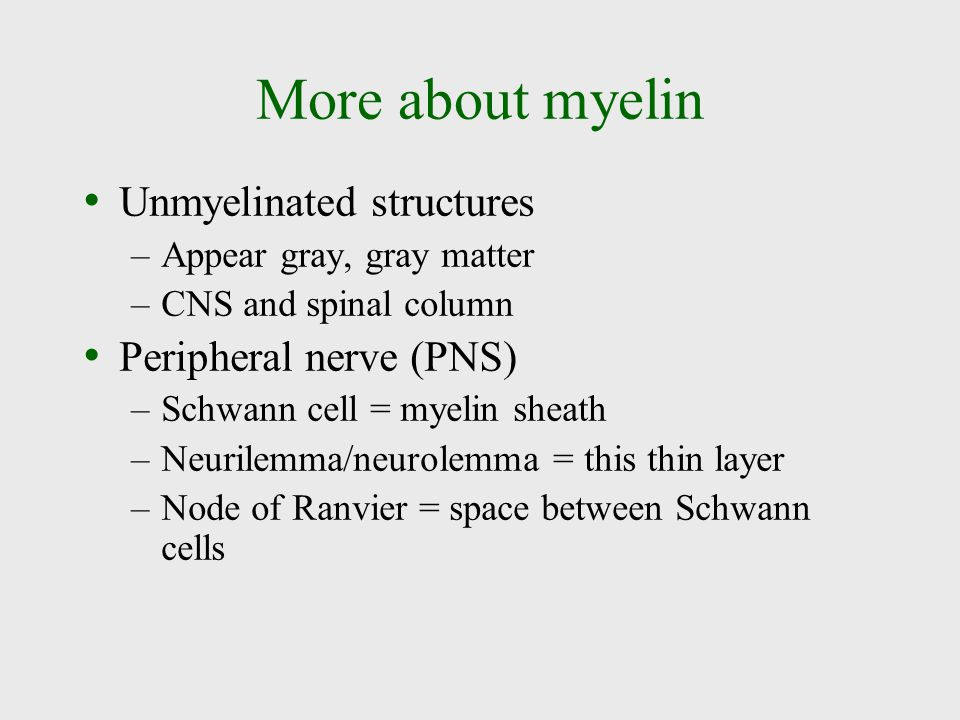 More about myelin Unmyelinated structures –Appear gray, gray matter –CNS and spinal column Peripheral nerve (PNS) –Schwann cell = myelin sheath –Neuri