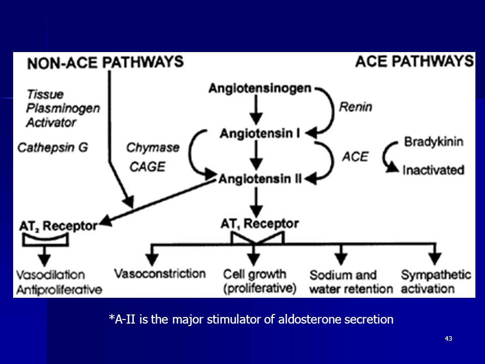 43 *A-II is the major stimulator of aldosterone secretion