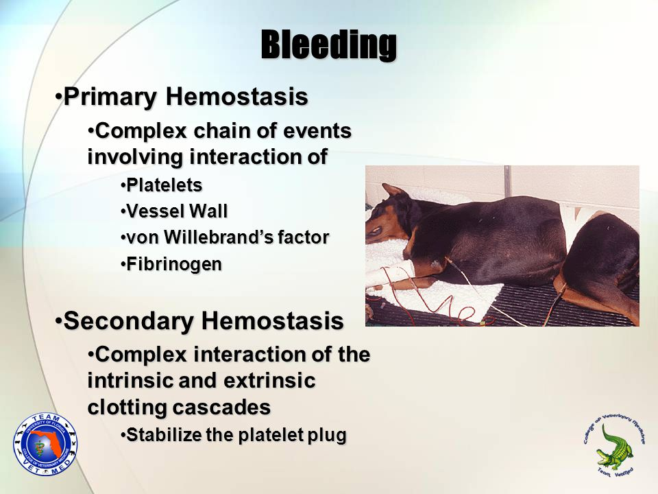 Primary Hemostasis Evaluated by the bleeding timeEvaluated by the bleeding time Platelet numberPlatelet number Amount and Quality of the von WIllebrand's factor VIII:AgAmount and Quality of the von WIllebrand's factor VIII:Ag Fibrinogen concentrationFibrinogen concentration Other alterations due to vessel wall disordersOther alterations due to vessel wall disorders