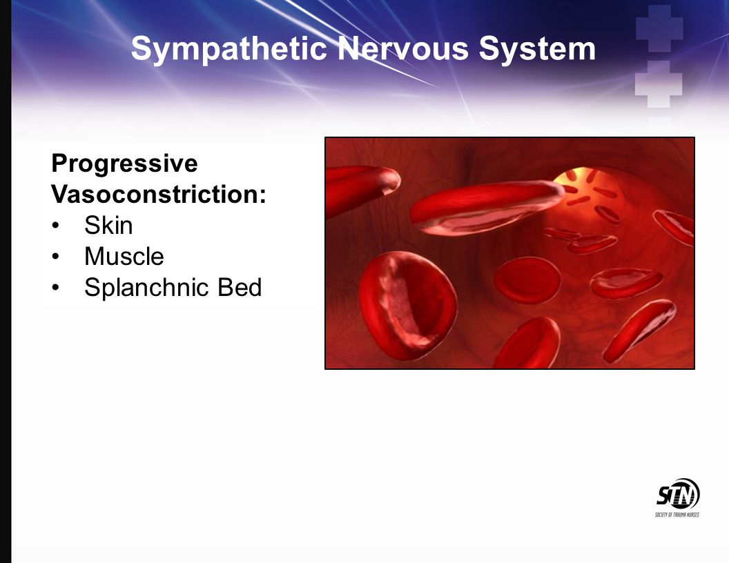 Sympathetic Nervous System Progressive Vasoconstriction: Skin Muscle Splanchnic Bed