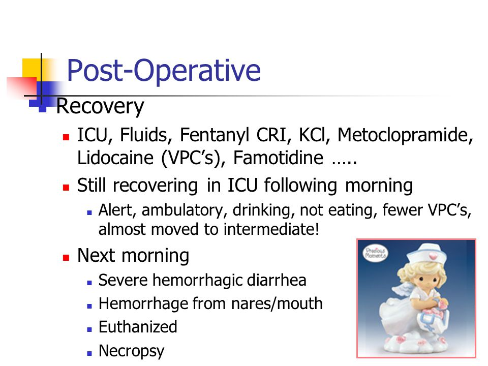 Post-Operative Recovery ICU, Fluids, Fentanyl CRI, KCl, Metoclopramide, Lidocaine (VPC's), Famotidine …..