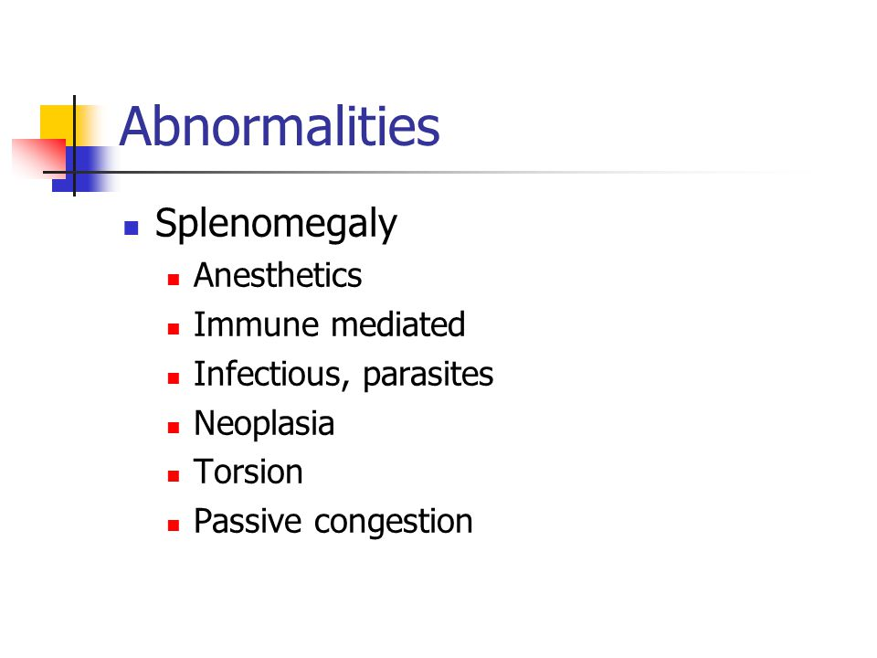 Abnormalities Splenomegaly Anesthetics Immune mediated Infectious, parasites Neoplasia Torsion Passive congestion