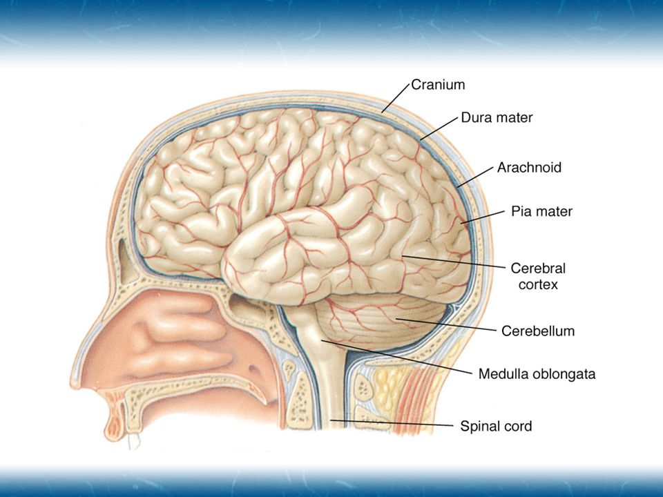 Diffuse Brain Injury  Due to stretching forces placed on axons  Pathology distributed throughout brain  Types  Concussion  Moderate Diffuse Axonal Injury  Severe Diffuse Axonal Injury  Due to stretching forces placed on axons  Pathology distributed throughout brain  Types  Concussion  Moderate Diffuse Axonal Injury  Severe Diffuse Axonal Injury