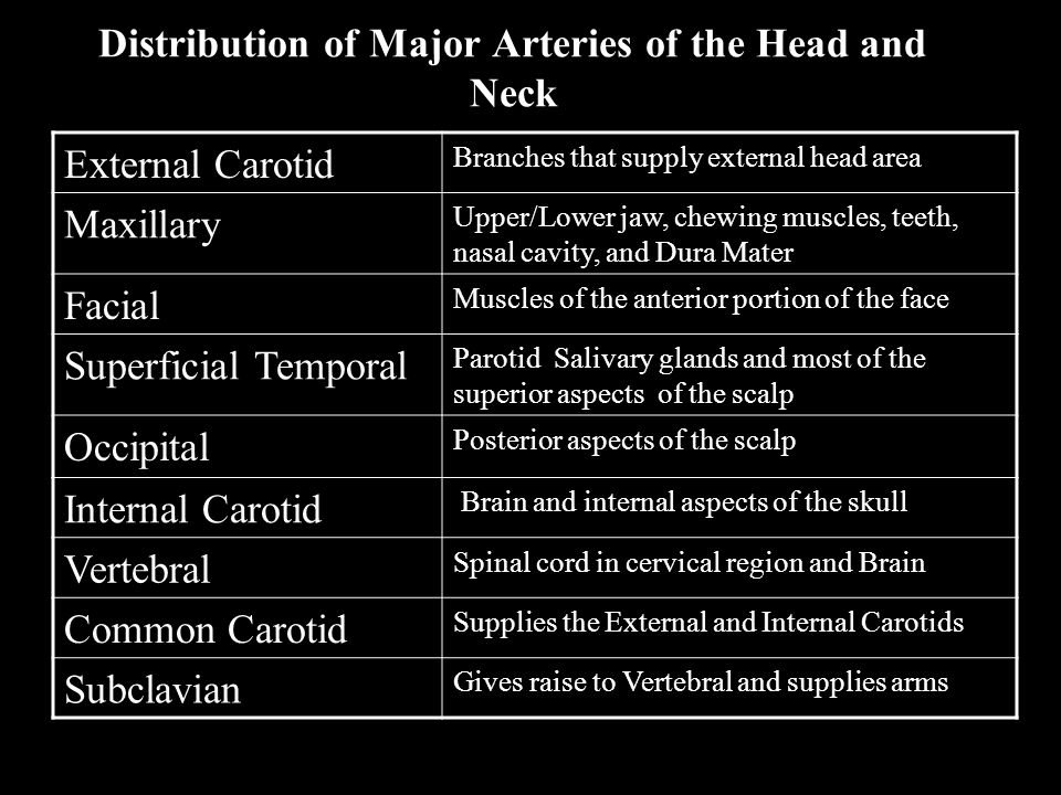 Distribution of Major Arteries of the Head and Neck Anterior cerebral (IC) supply most of the cerebral hemisphere except the occipital lobes Middle cerebral (IC) Supply most of the lateral surface of the cerebral hemispheres Basilar Formed by union of the L&R vertebral, Cranial meninges and cerebrum Posterior cerebral Terminal branch of the basilar, supply interior aspect of cerebral hemispheres and occipital lobe Circle of Willis An anastomosis for the two vertebral and internal carotid arteries.