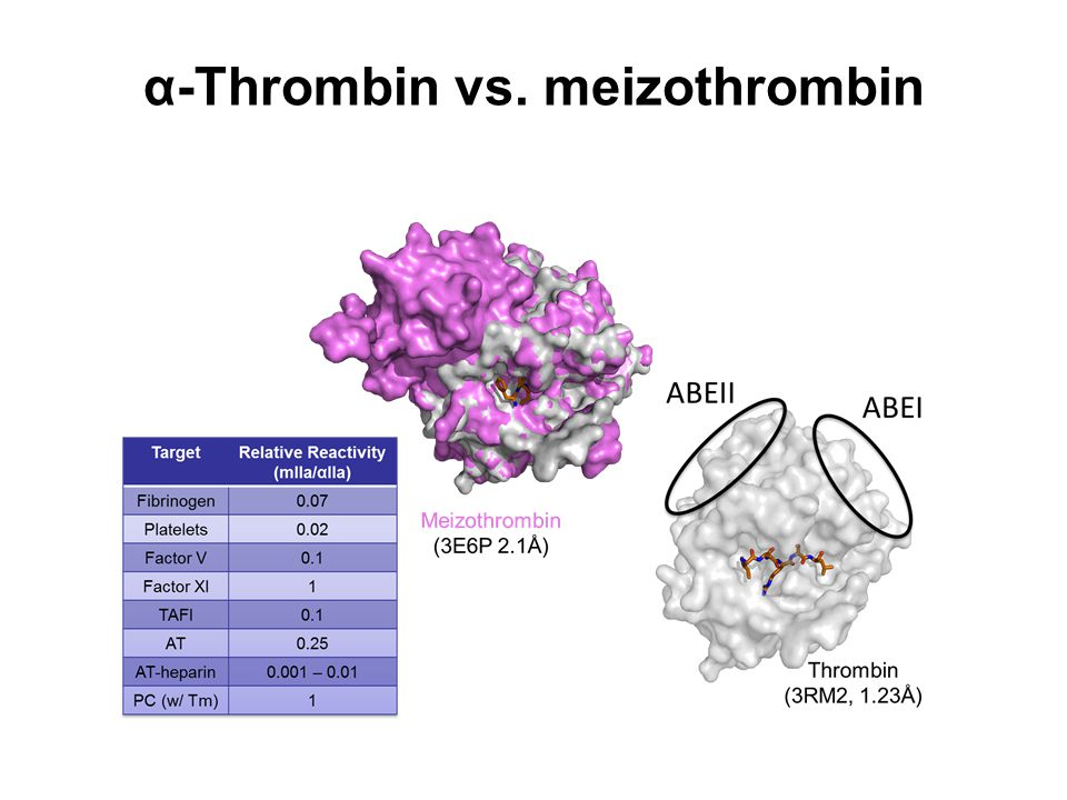 α-Thrombin vs. meizothrombin
