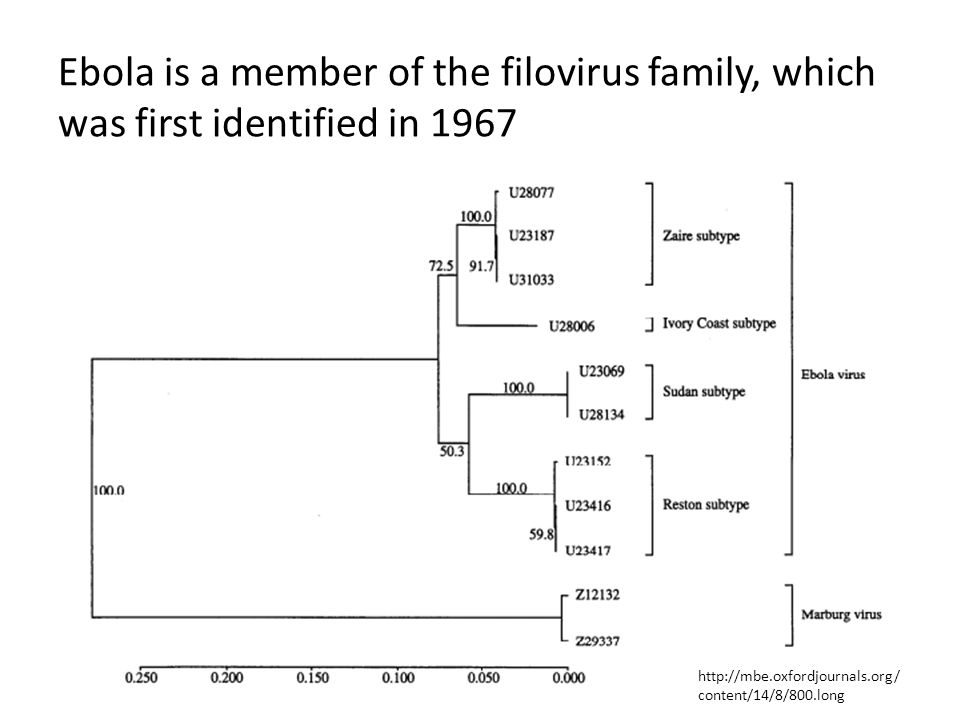 Ebola is a member of the filovirus family, which was first identified in 1967 http://mbe.oxfordjournals.org/ content/14/8/800.long