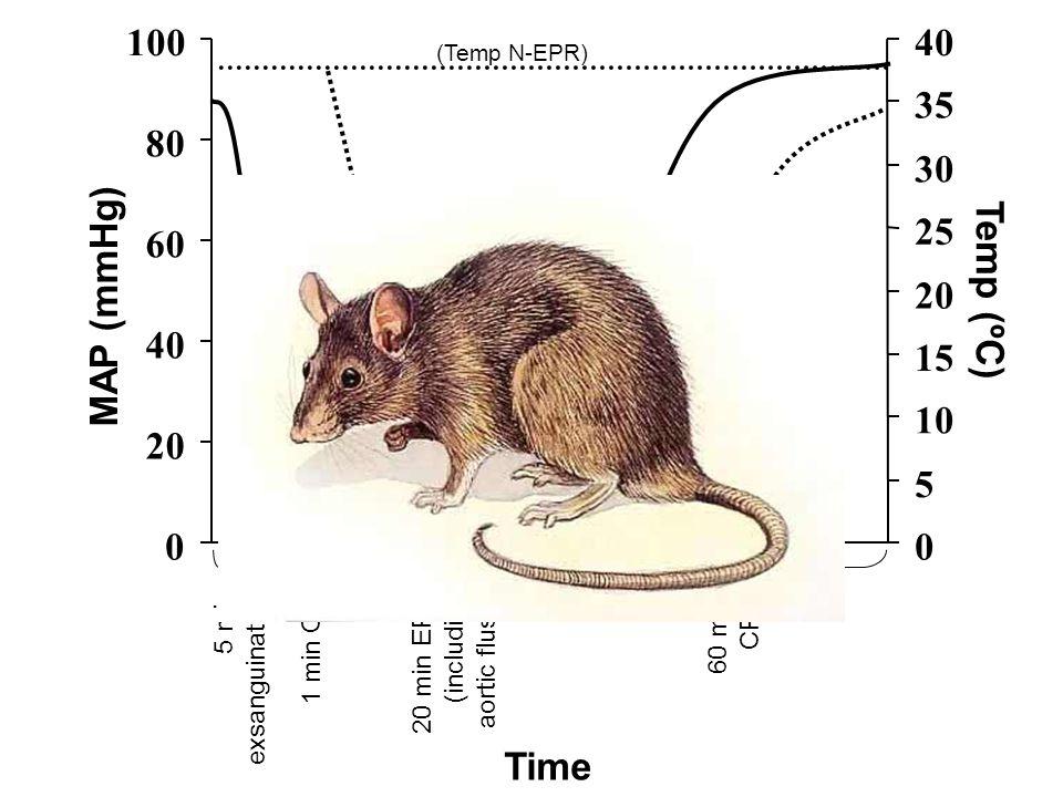 0 20 40 60 80 100 Time 0 5 10 15 20 25 30 35 40 Temp (ºC) 5 min exsanguination 20 min EPR (including aortic flush) 1 min CA 60 min CPB (Temp N-EPR) (T