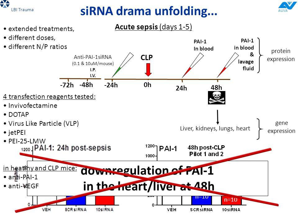 -24h 0h0h 24h CLP 48h Acute sepsis (days 1-5) Anti-PAI-1siRNA (0.1 & 10uM/mouse) I.P.