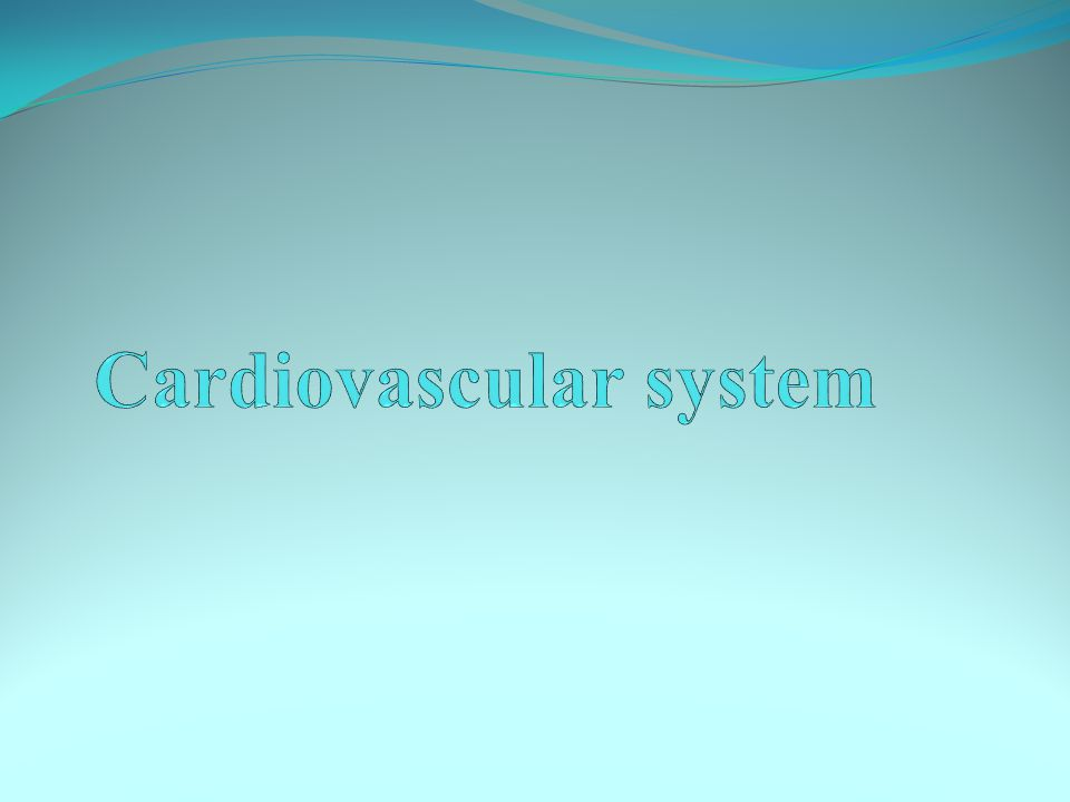 The heart is a conical,muscular organ that evolved into a four chambered pump with four valves..