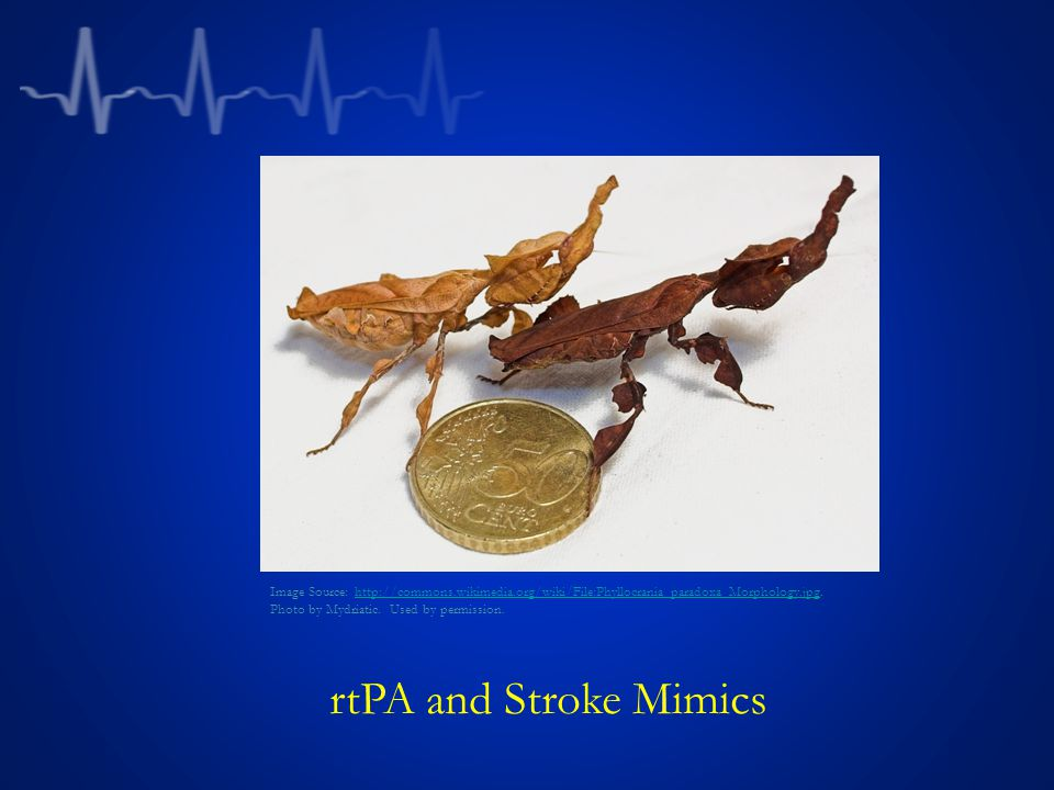 rtPA and Stroke Mimics Image Source: http://commons.wikimedia.org/wiki/File:Phyllocrania_paradoxa_Morphology.jpg. Photo by Mydriatic. Used by permissi