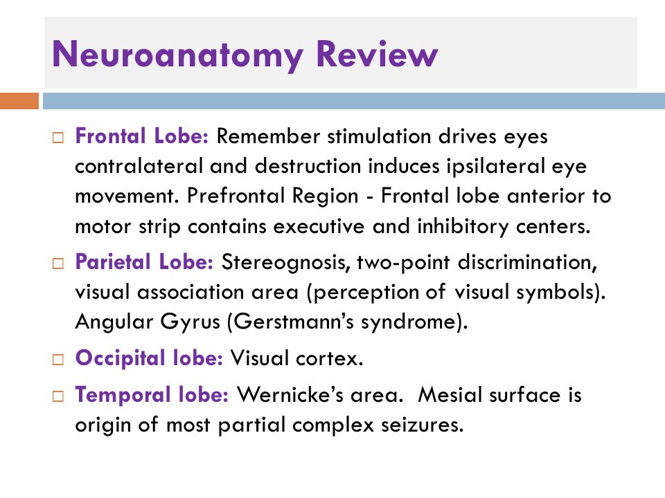 Neuroanatomy Review  Frontal Lobe: Remember stimulation drives eyes contralateral and destruction induces ipsilateral eye movement.