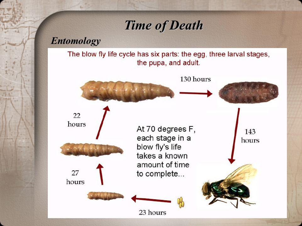 Time of Death Entomology