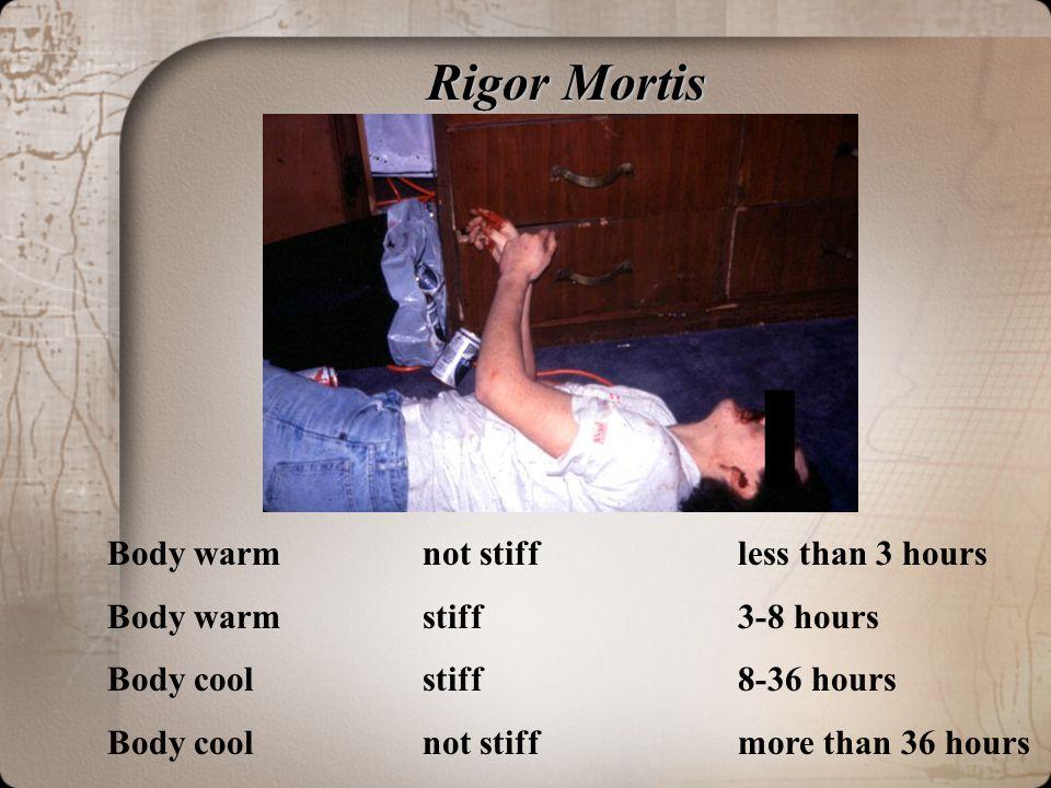 Rigor Mortis Rigor Mortis Body warmnot stiffless than 3 hours Body warmstiff3-8 hours Body coolstiff8-36 hours Body coolnot stiffmore than 36 hours