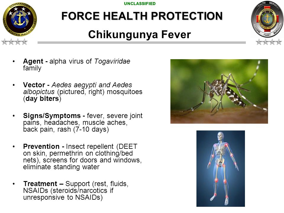 UNCLASSIFIED FORCE HEALTH PROTECTION Chikungunya Fever Agent - alpha virus of Togaviridae family Vector - Aedes aegypti and Aedes albopictus (pictured, right) mosquitoes (day biters) Signs/Symptoms - fever, severe joint pains, headaches, muscle aches, back pain, rash (7-10 days) Prevention - Insect repellent (DEET on skin, permethrin on clothing/bed nets), screens for doors and windows, eliminate standing water Treatment – Support (rest, fluids, NSAIDs (steroids/narcotics if unresponsive to NSAIDs)