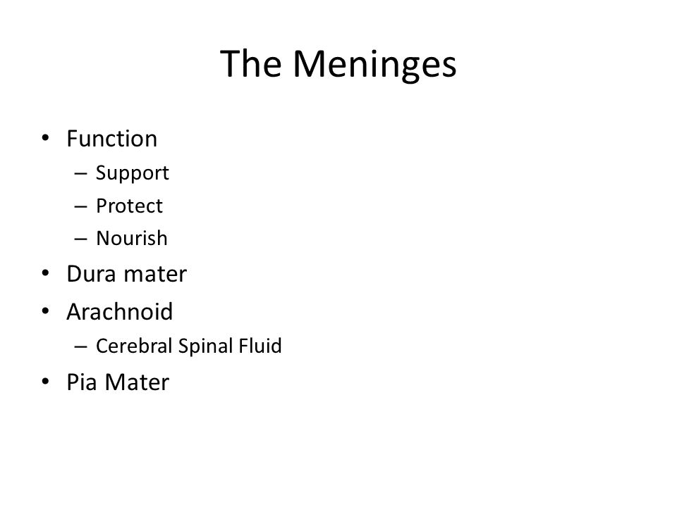 The Meninges Function – Support – Protect – Nourish Dura mater Arachnoid – Cerebral Spinal Fluid Pia Mater