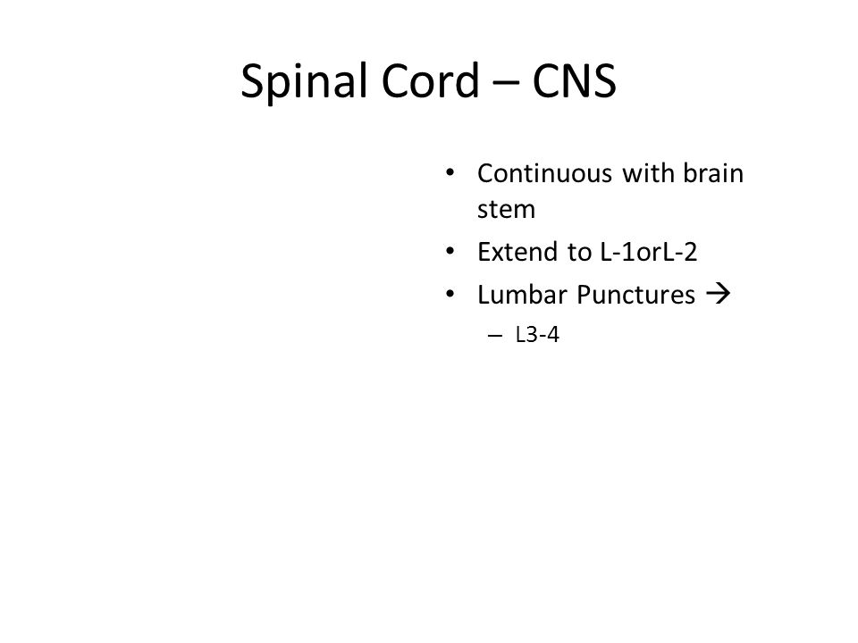 Spinal Cord – CNS Continuous with brain stem Extend to L-1orL-2 Lumbar Punctures  – L3-4