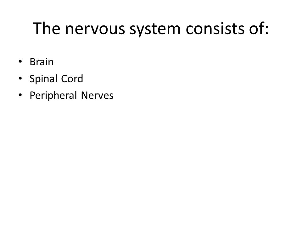 The nervous system consists of: Brain Spinal Cord Peripheral Nerves