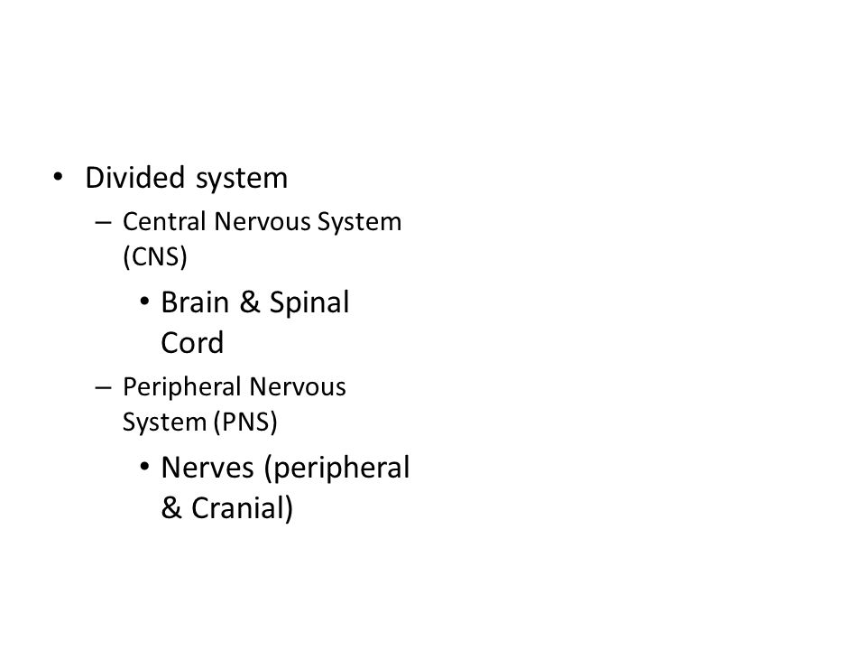 Divided system – Central Nervous System (CNS) Brain & Spinal Cord – Peripheral Nervous System (PNS) Nerves (peripheral & Cranial)