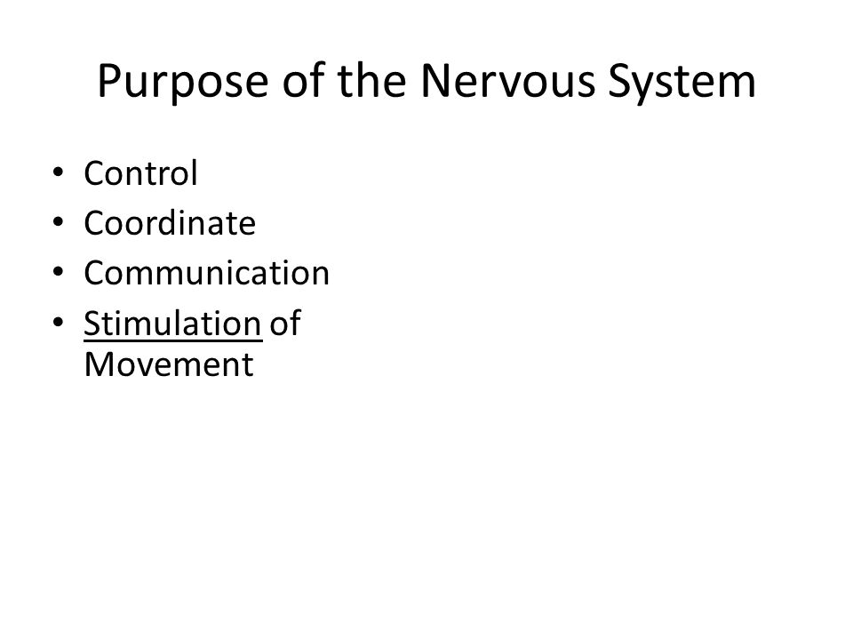 Purpose of the Nervous System Control Coordinate Communication Stimulation of Movement