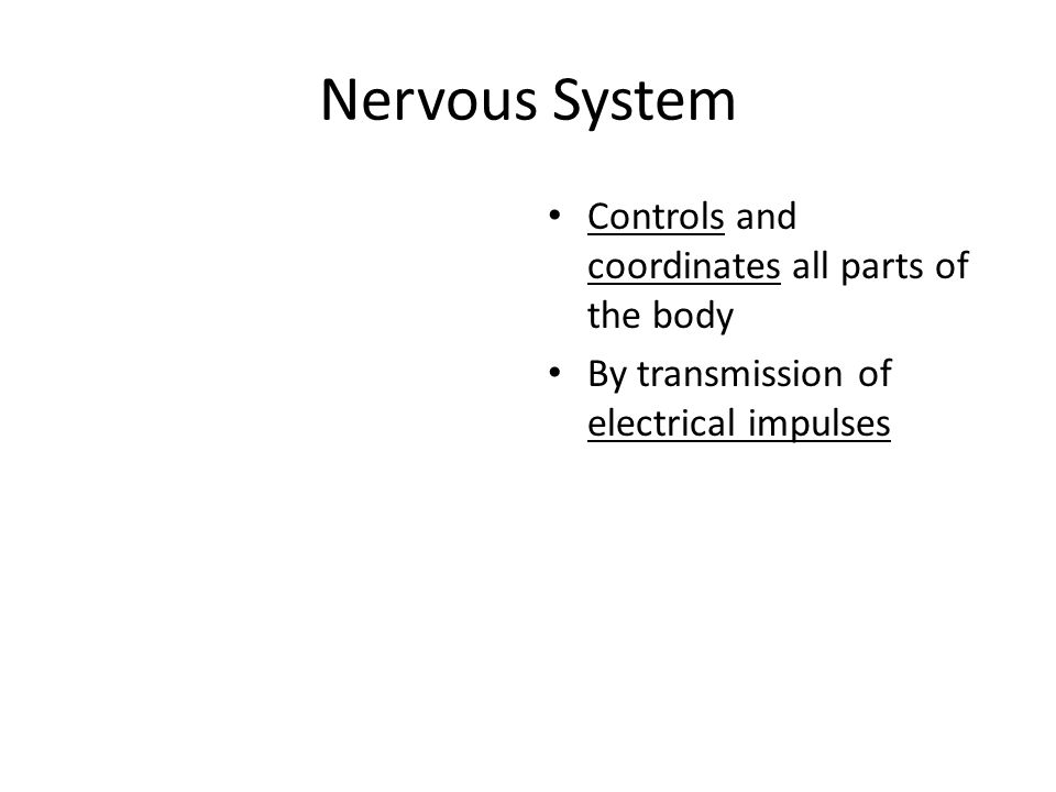 Nervous System Controls and coordinates all parts of the body By transmission of electrical impulses