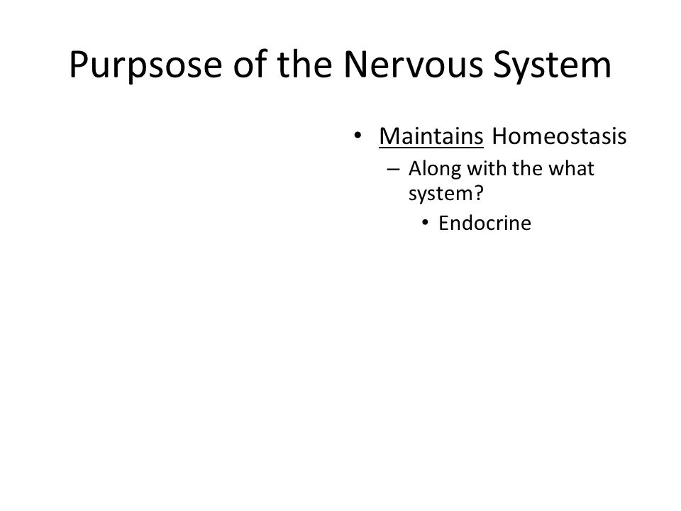 Purpsose of the Nervous System Maintains Homeostasis – Along with the what system? Endocrine