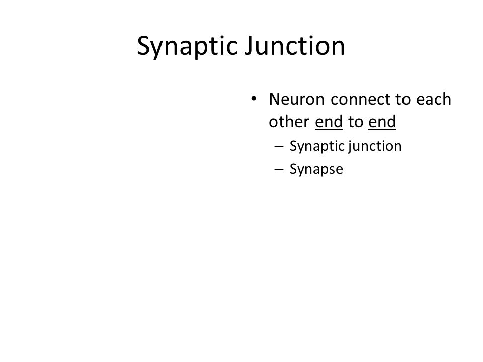 Synaptic Junction Neuron connect to each other end to end – Synaptic junction – Synapse