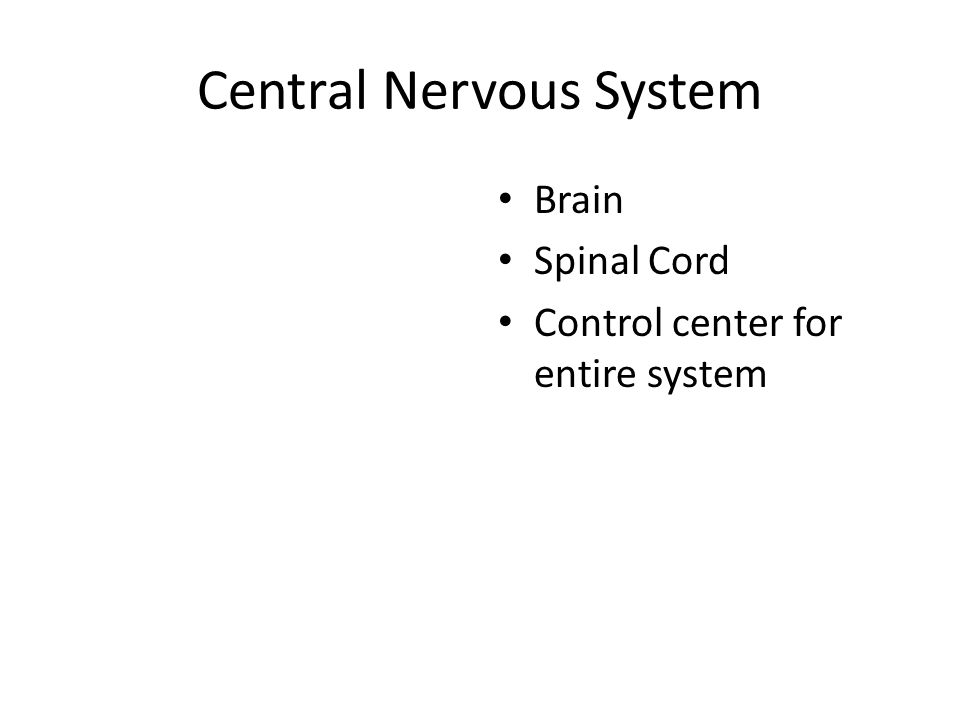 Central Nervous System Brain Spinal Cord Control center for entire system