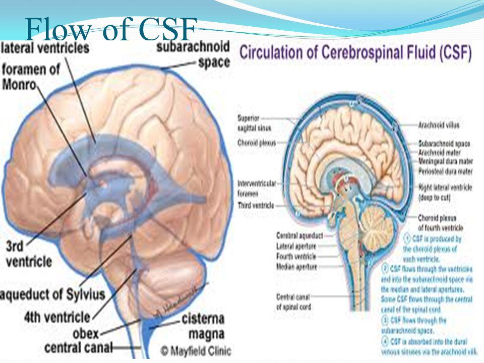 Ex vacuo hydrocephalus Present when brain insult leads atrophy