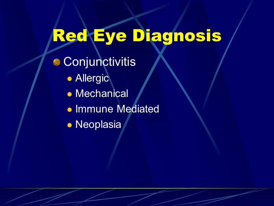 Red Eye Diagnosis Conjunctivitis Allergic Mechanical Immune Mediated Neoplasia