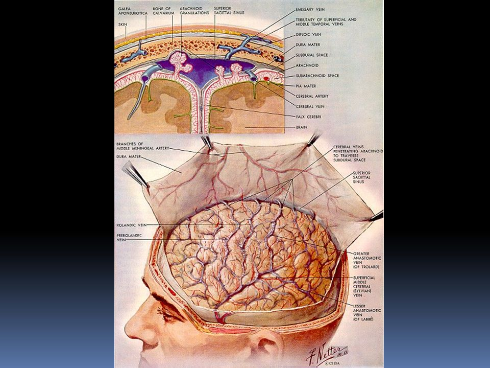 Outline  Introduction  Cerebrovascular disease  Traumatic Head and brain injury  Infections  Tumors  Degenerative disorders  Miscellaneous - Alcohol/Nutrition Demyelinating Disorders Congenital malformations Perinatal Brain Injury.