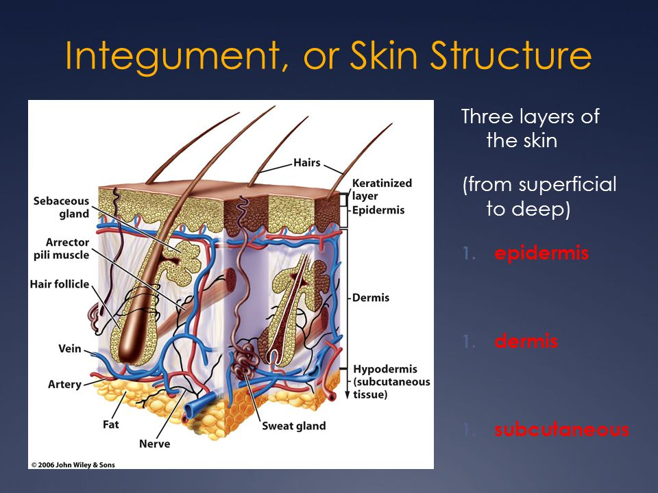 More Skin Abbreviations IM: Intramuscular IMP: Impression, or diagnosis PE: Physical Examination Sub-Q, Subcu: Subcutaneous Ung: Ointment WBC: White blood cell XP: Xeroderma pigmentosum