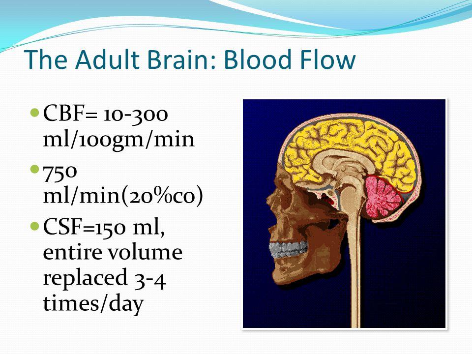 The Adult Brain: Blood Flow CBF= 10-300 ml/100gm/min 750 ml/min(20%co) CSF=150 ml, entire volume replaced 3-4 times/day