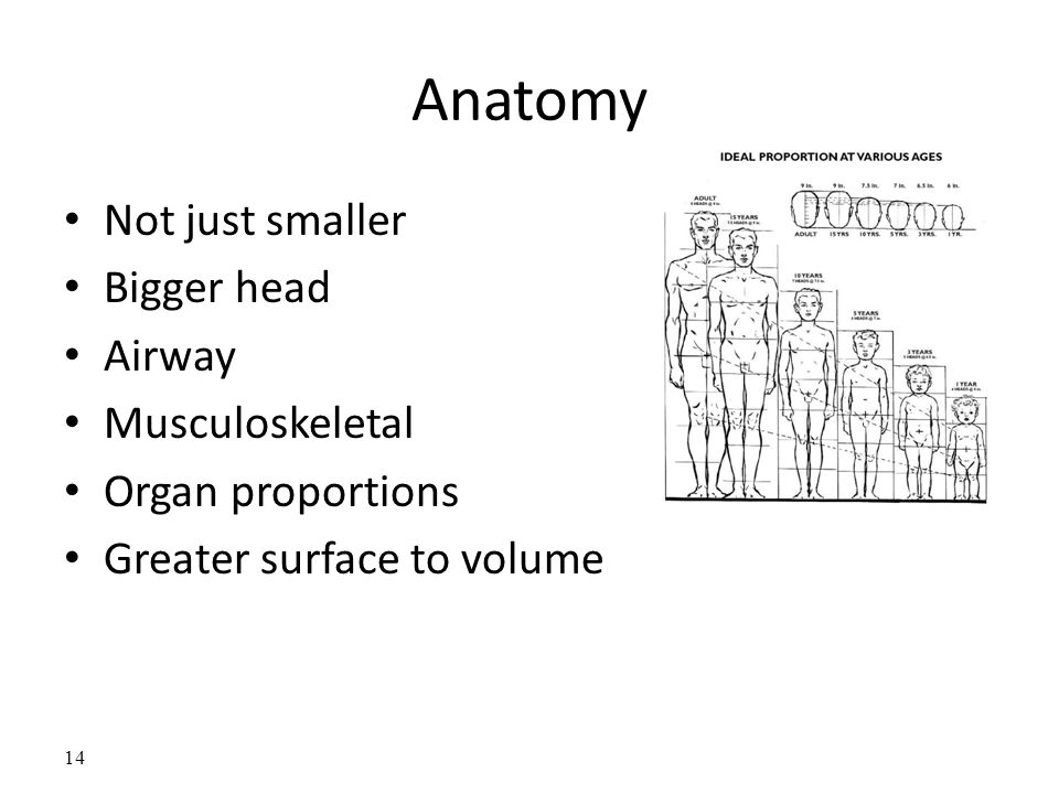 Anatomy Not just smaller Bigger head Airway Musculoskeletal Organ proportions Greater surface to volume 14