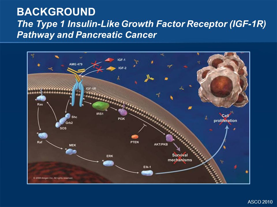 ASCO 2010 BACKGROUND The Type 1 Insulin-Like Growth Factor Receptor (IGF-1R) Pathway and Pancreatic Cancer