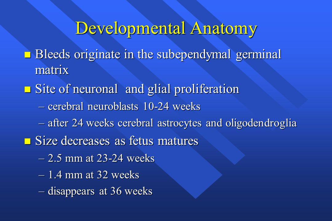 Developmental Anatomy n Bleeds originate in the subependymal germinal matrix n Site of neuronal and glial proliferation –cerebral neuroblasts 10-24 we