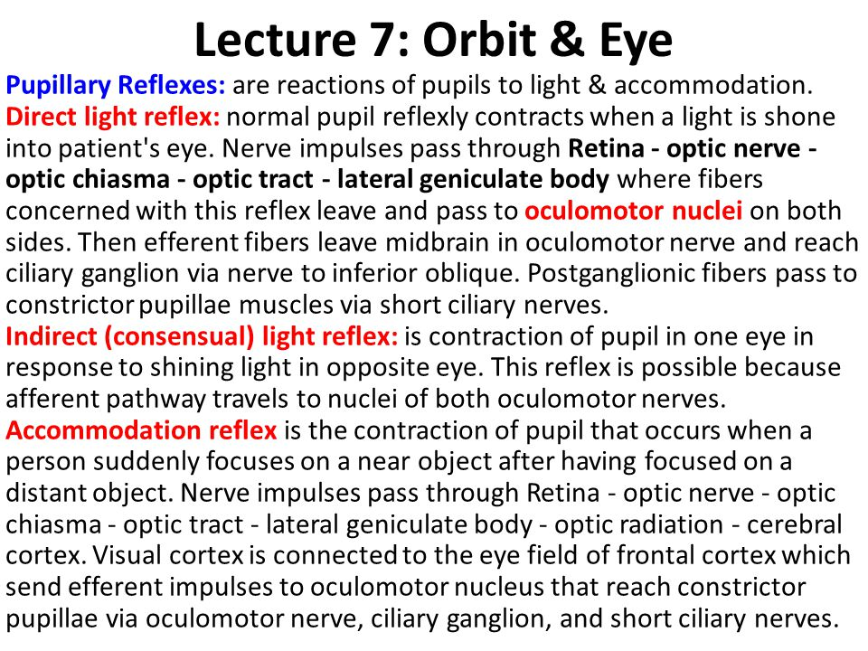 Lecture 7: Orbit & Eye Pupillary Reflexes: are reactions of pupils to light & accommodation. Direct light reflex: normal pupil reflexly contracts when