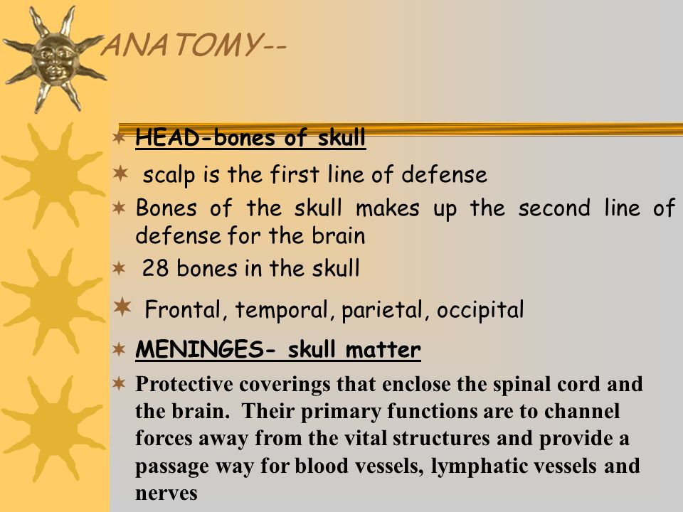 ANATOMY--  HEAD-bones of skull  scalp is the first line of defense  Bones of the skull makes up the second line of defense for the brain  28 bones in the skull  Frontal, temporal, parietal, occipital  MENINGES- skull matter  Protective coverings that enclose the spinal cord and the brain.