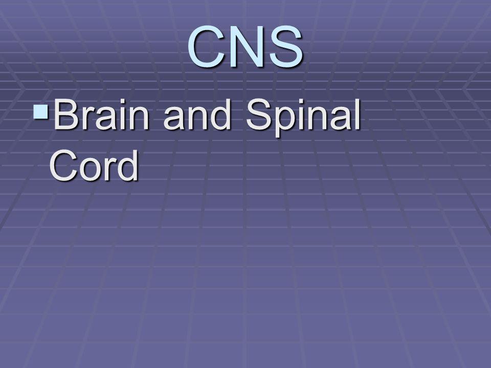 CNS:PROTECTION  CSF: Circulates subarachnoid space  Cushions, and nourishes.