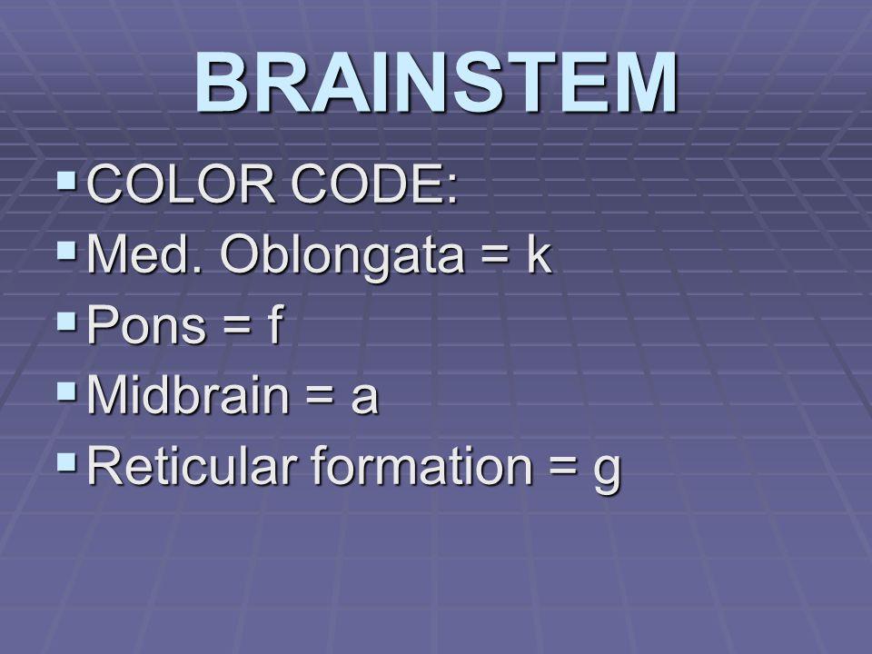 BRAINSTEM  COLOR CODE:  Med. Oblongata = k  Pons = f  Midbrain = a  Reticular formation = g